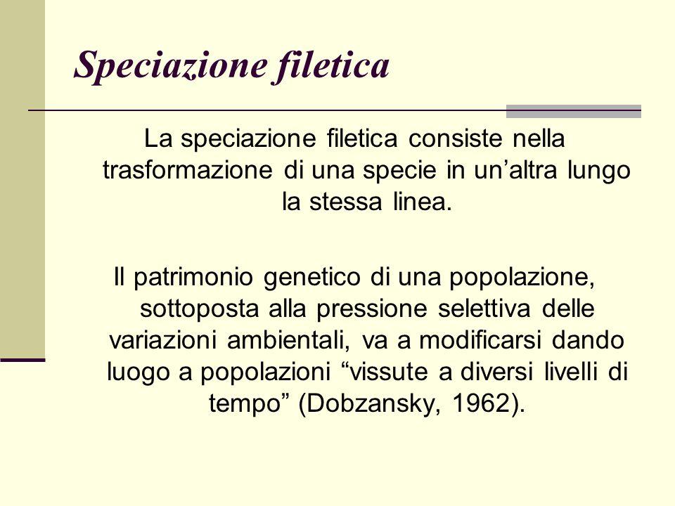 Speciazione filetica La speciazione filetica consiste nella trasformazione di una specie in un'altra lungo la stessa linea.