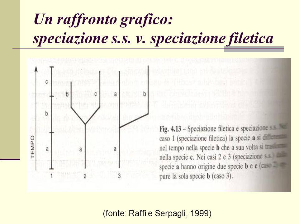 Un raffronto grafico: speciazione s.s. v. speciazione filetica