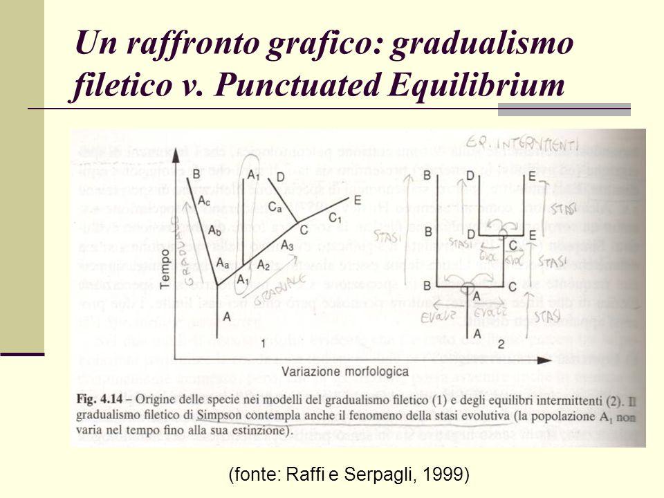 Un raffronto grafico: gradualismo filetico v. Punctuated Equilibrium