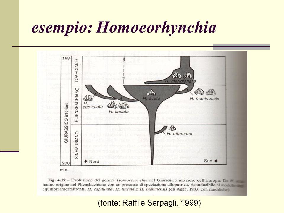 esempio: Homoeorhynchia