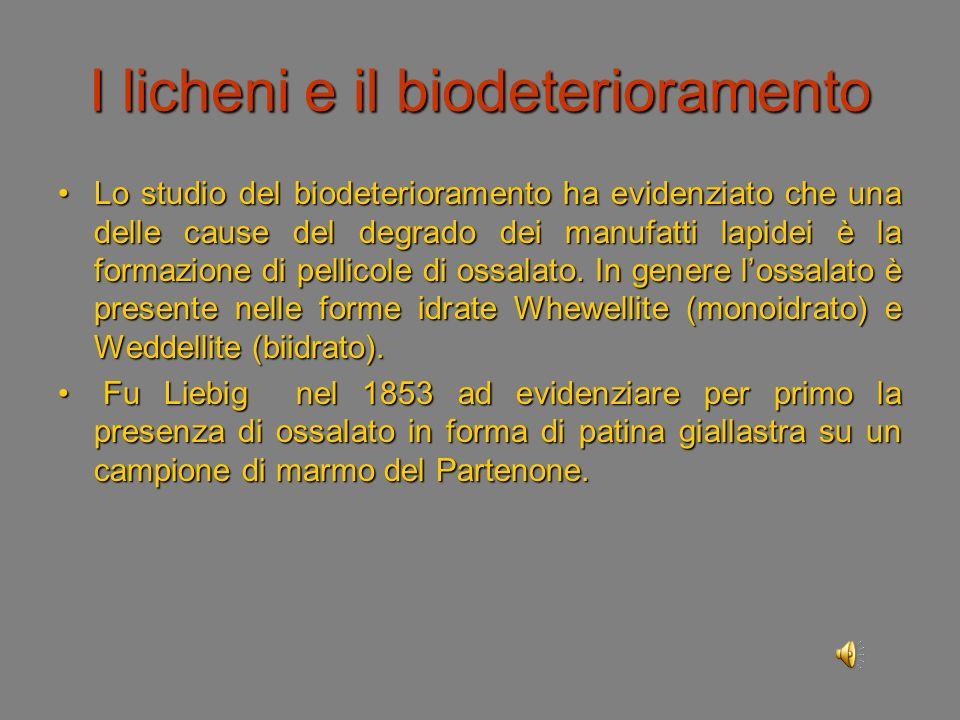 I licheni e il biodeterioramento