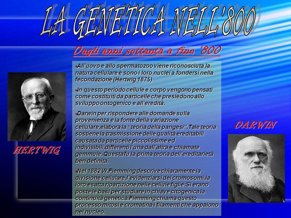 LA GENETICA NELL 800 Dagli anni settanta a fine '800 DARWIN HERTWIG