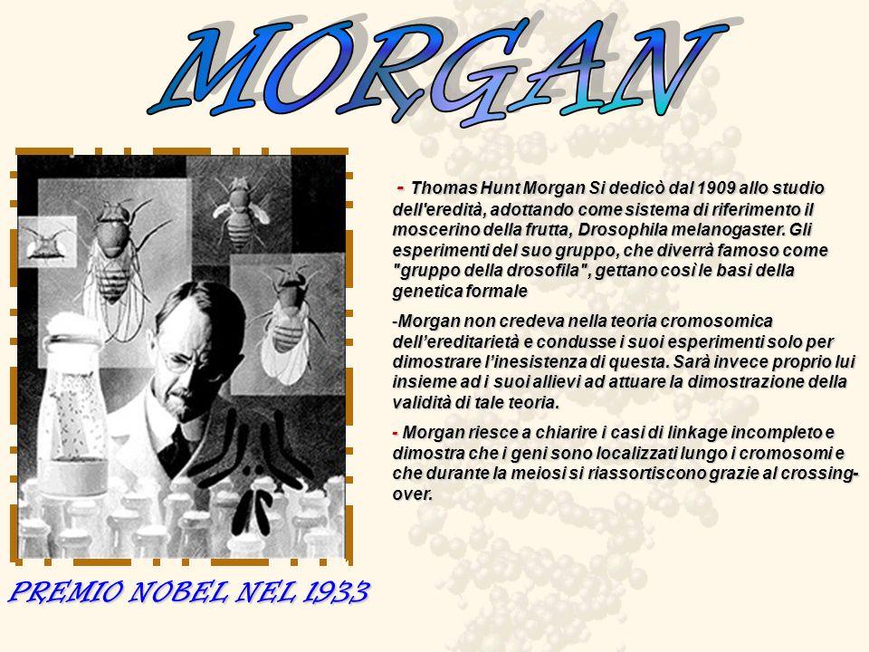 MORGAN PREMIO NOBEL NEL 1933