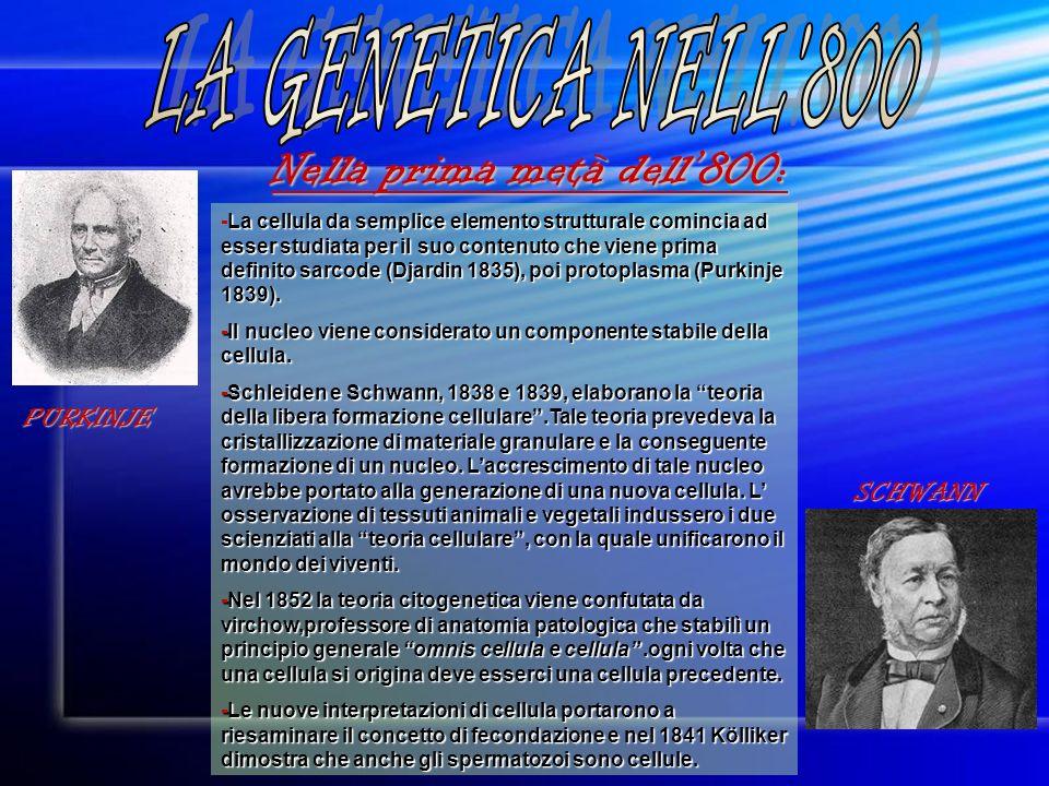 LA GENETICA NELL 800 Nella prima metà dell'800: PURKINJE SCHWANN
