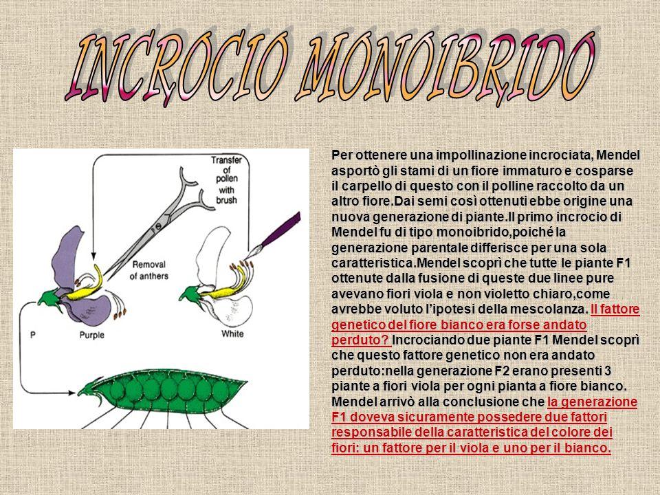 INCROCIO MONOIBRIDO