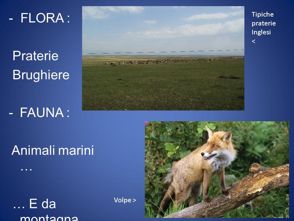 - FLORA : Praterie Brughiere FAUNA : Animali marini … … E da montagna