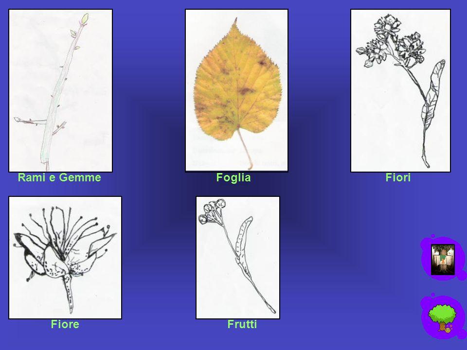 Rami e Gemme Foglia Fiori Fiore Frutti