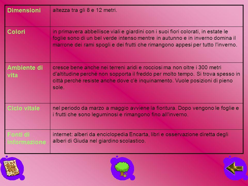 Dimensioni Colori Ambiente di vita Ciclo vitale Fonti di informazione