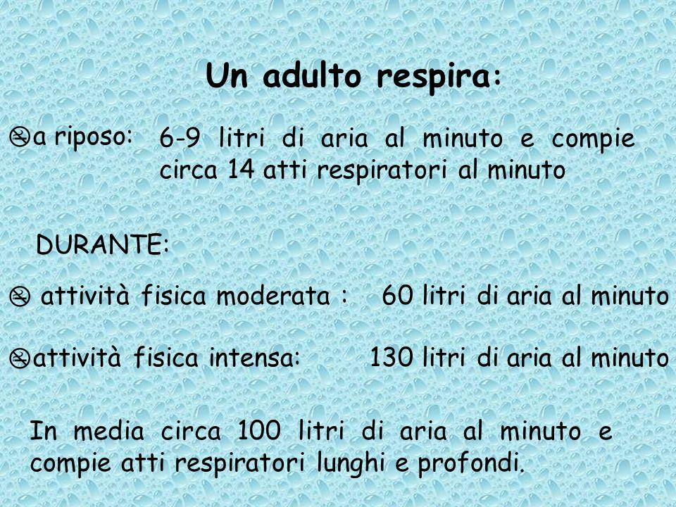 Un adulto respira: a riposo: