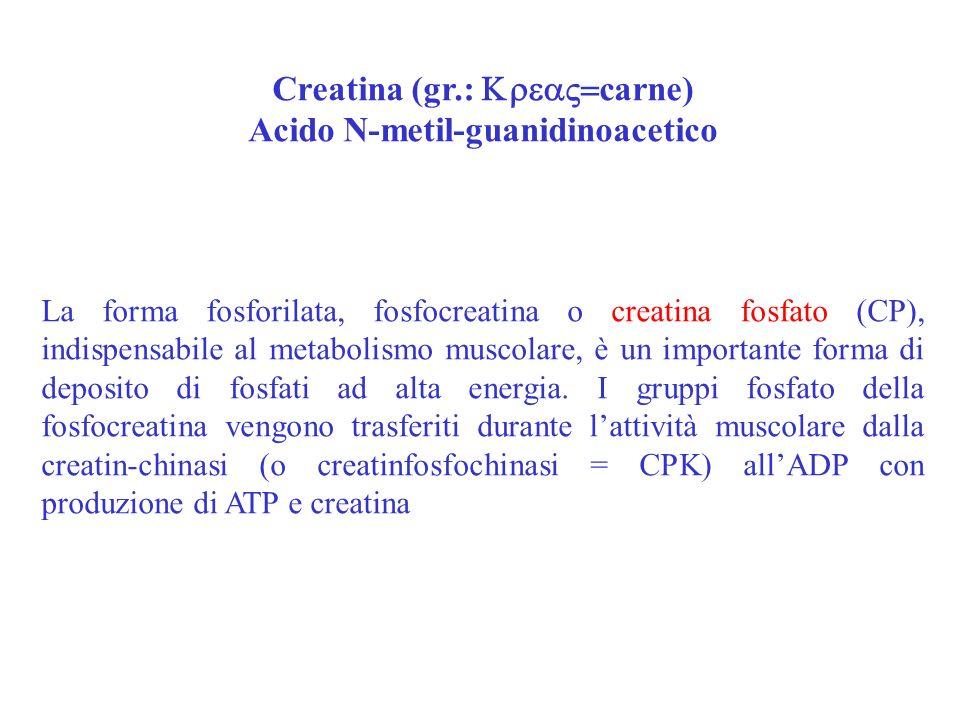 Creatina (gr.: Krea=carne) Acido N-metil-guanidinoacetico