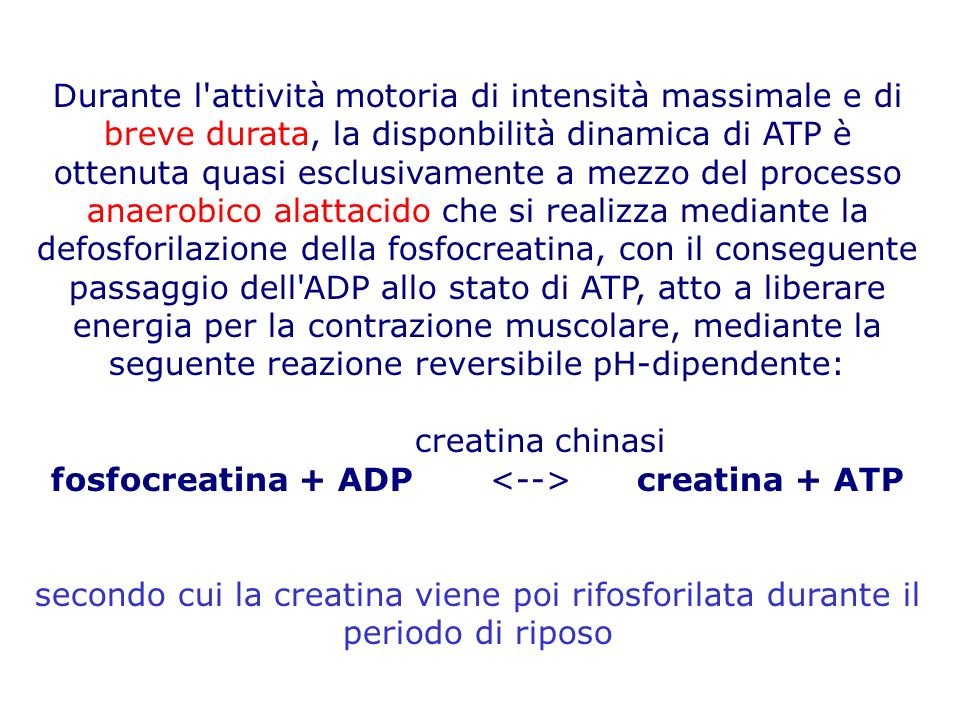 fosfocreatina + ADP <--> creatina + ATP