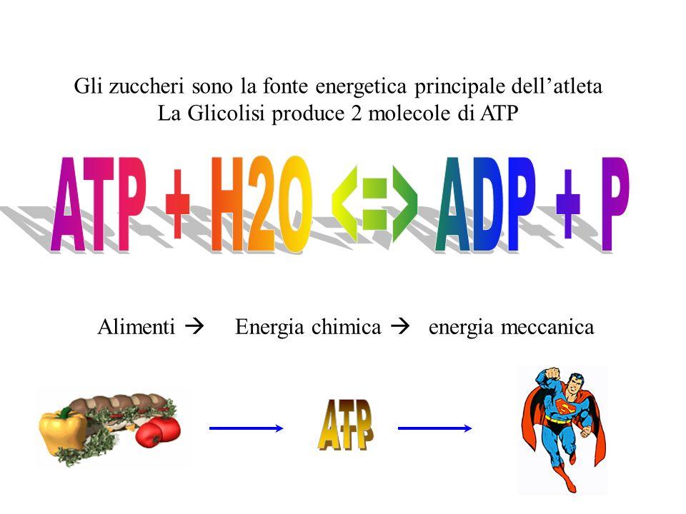 ATP + H2O <=> ADP + P