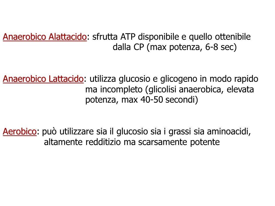 Anaerobico Alattacido: sfrutta ATP disponibile e quello ottenibile