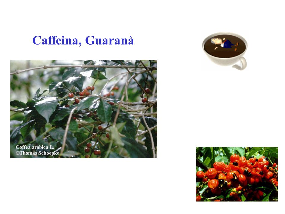 Caffeina, Guaranà