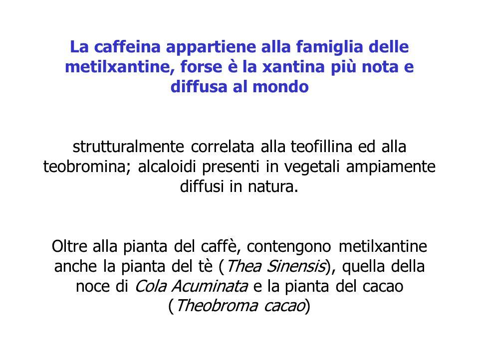 La caffeina appartiene alla famiglia delle metilxantine, forse è la xantina più nota e diffusa al mondo