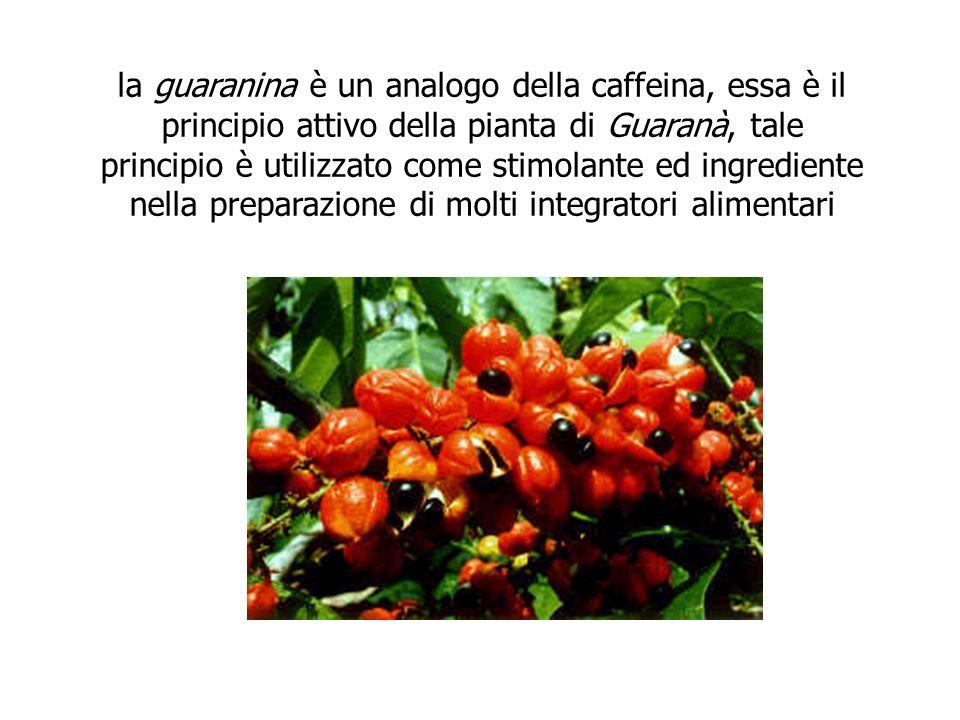 la guaranina è un analogo della caffeina, essa è il principio attivo della pianta di Guaranà, tale principio è utilizzato come stimolante ed ingrediente nella preparazione di molti integratori alimentari