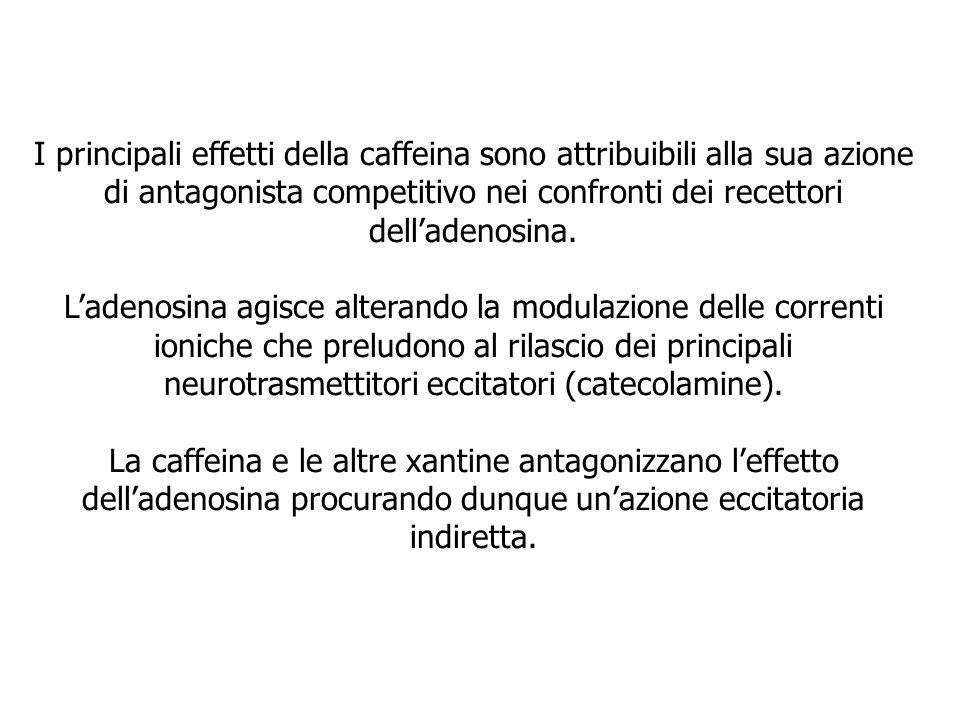 I principali effetti della caffeina sono attribuibili alla sua azione di antagonista competitivo nei confronti dei recettori dell'adenosina.