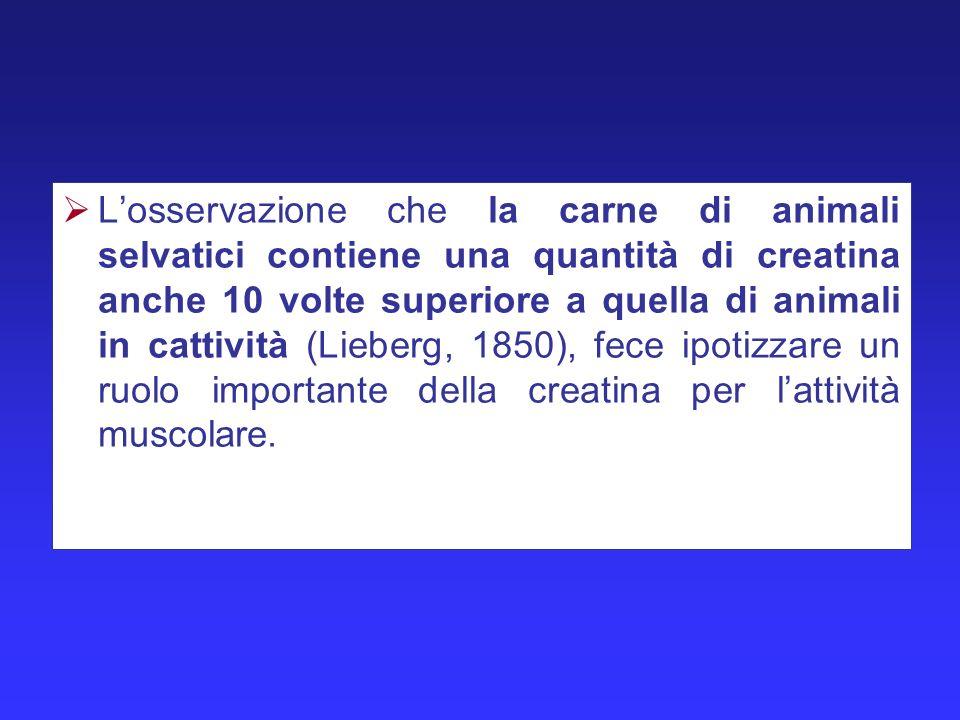 L'osservazione che la carne di animali selvatici contiene una quantità di creatina anche 10 volte superiore a quella di animali in cattività (Lieberg, 1850), fece ipotizzare un ruolo importante della creatina per l'attività muscolare.