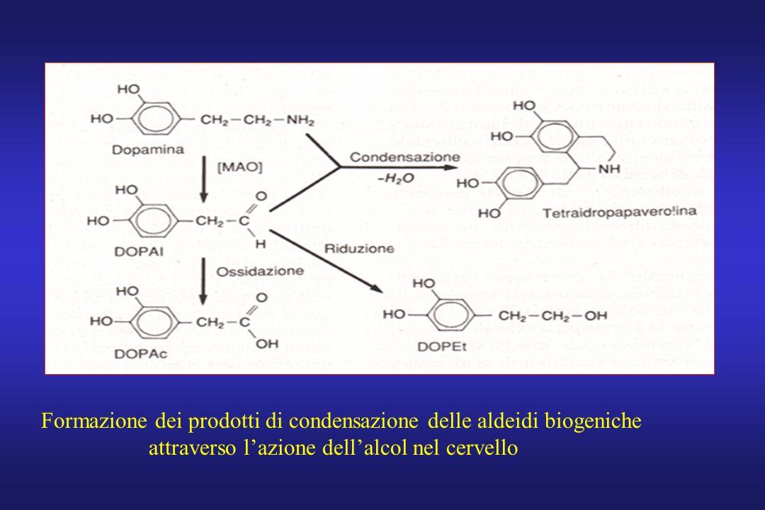 Formazione dei prodotti di condensazione delle aldeidi biogeniche