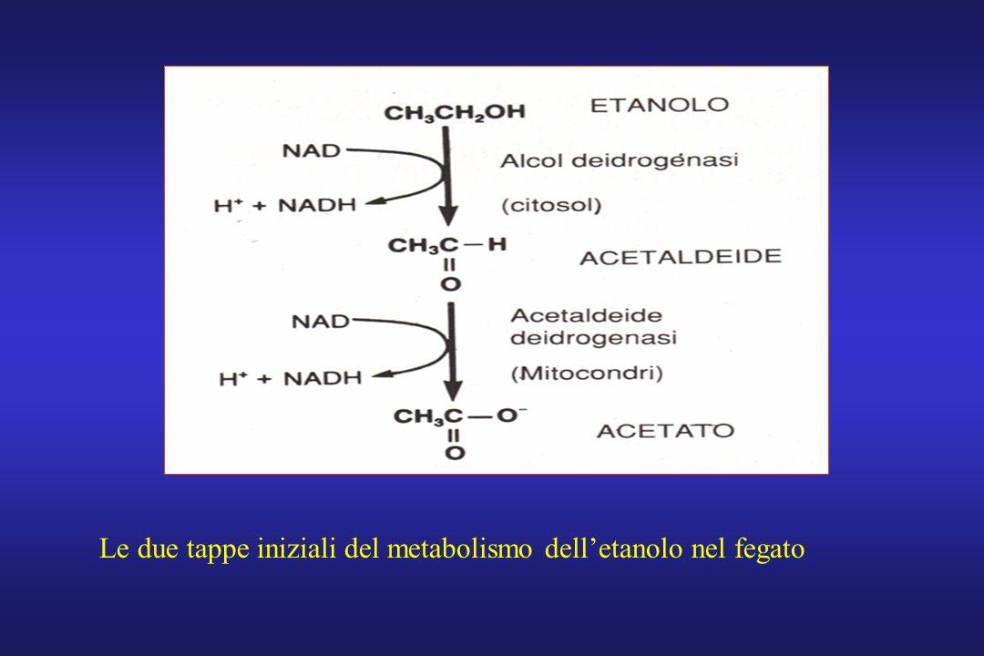 Le due tappe iniziali del metabolismo dell'etanolo nel fegato