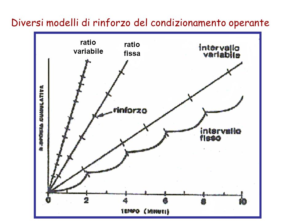 Diversi modelli di rinforzo del condizionamento operante