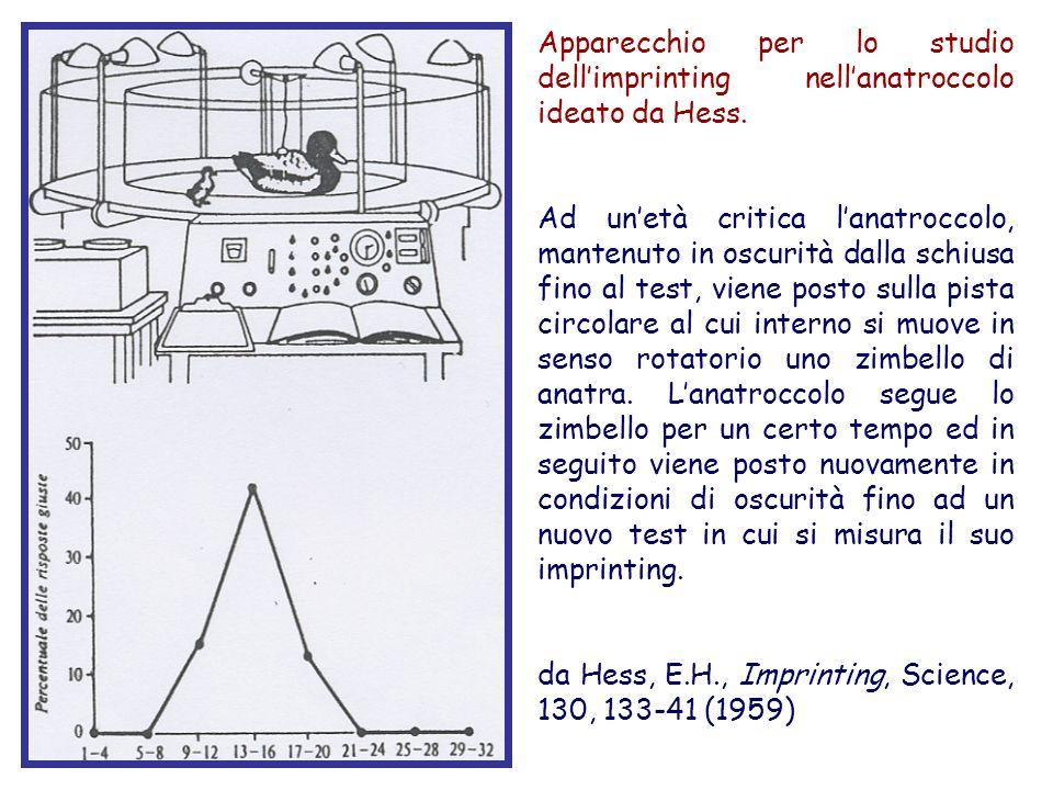 Apparecchio per lo studio dell'imprinting nell'anatroccolo ideato da Hess.