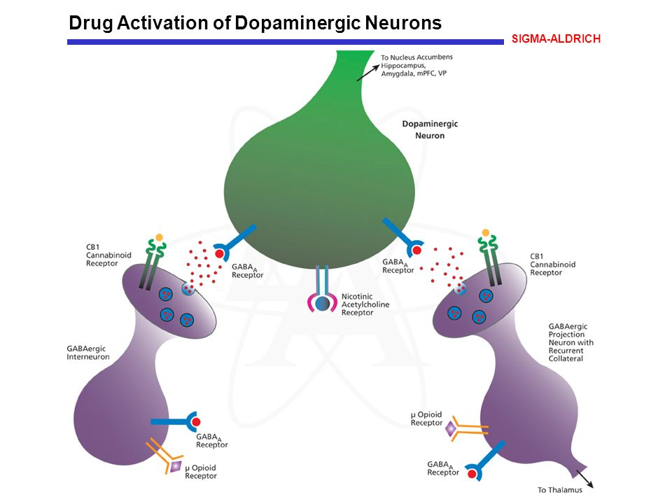 Drug Activation of Dopaminergic Neurons