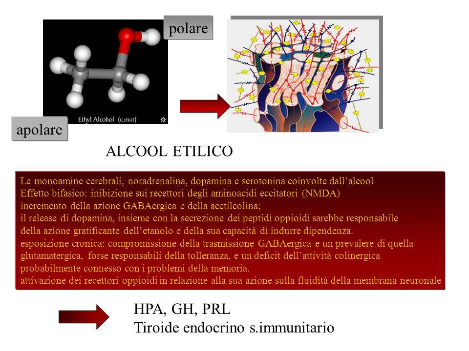 Tiroide endocrino s.immunitario