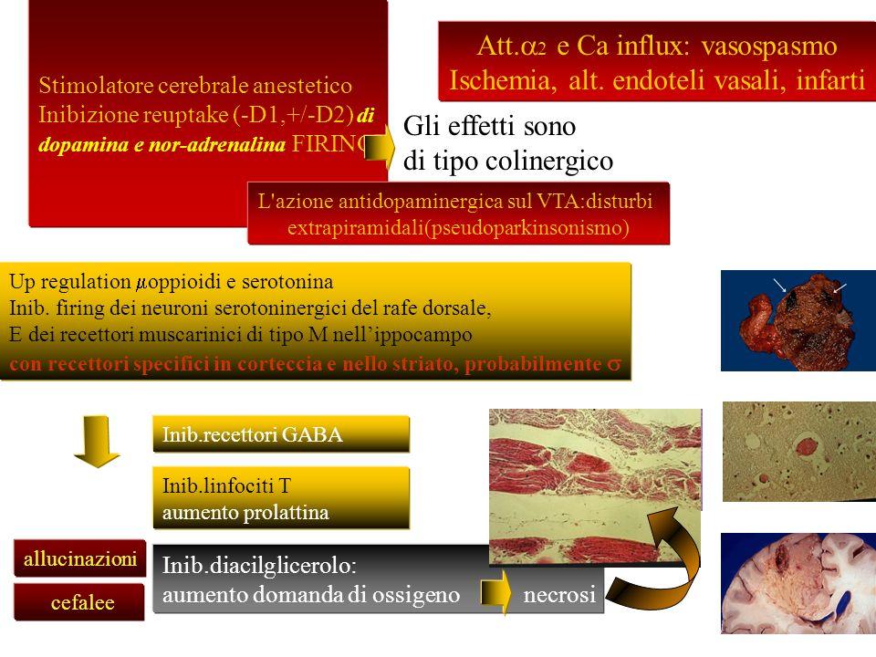 Att.a2 e Ca influx: vasospasmo Ischemia, alt. endoteli vasali, infarti
