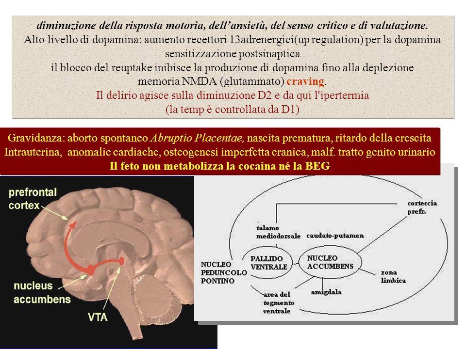 Il feto non metabolizza la cocaina né la BEG