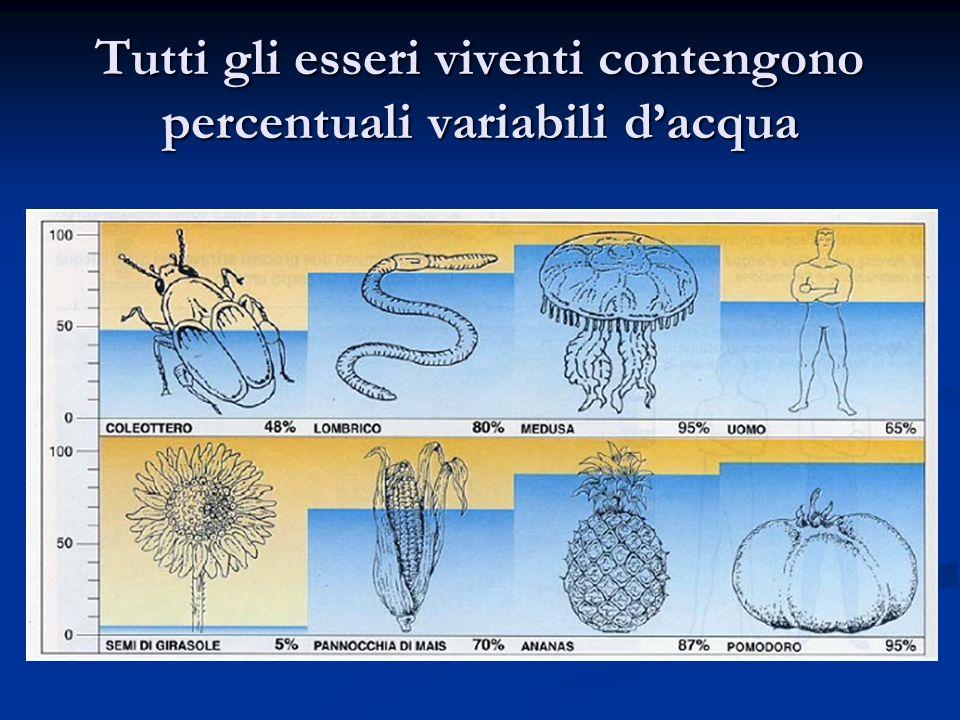 Tutti gli esseri viventi contengono percentuali variabili d'acqua