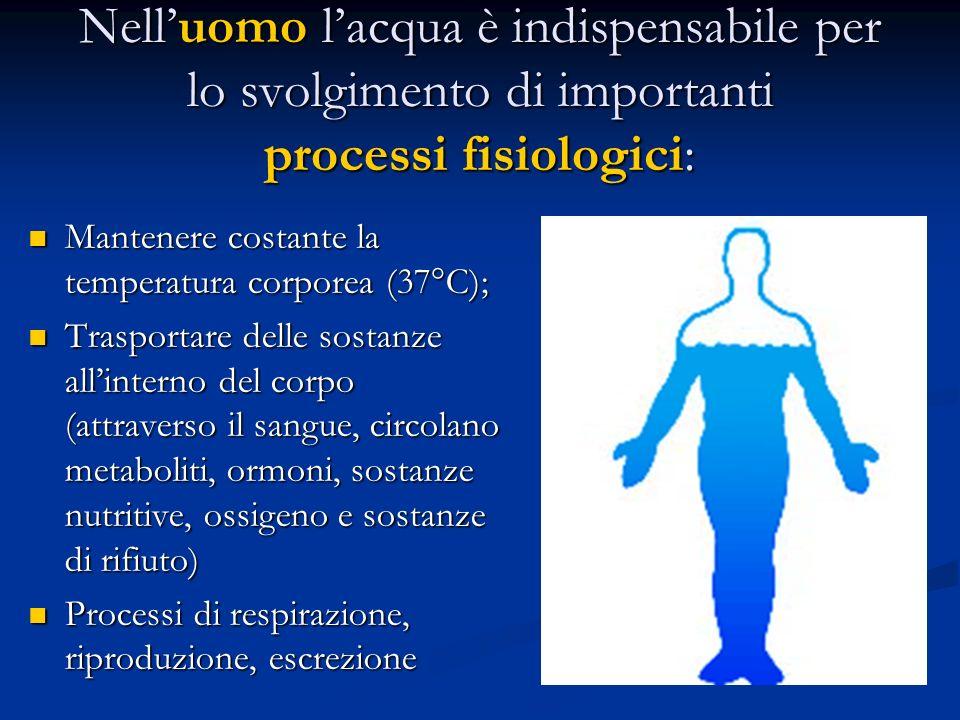Nell'uomo l'acqua è indispensabile per lo svolgimento di importanti processi fisiologici: