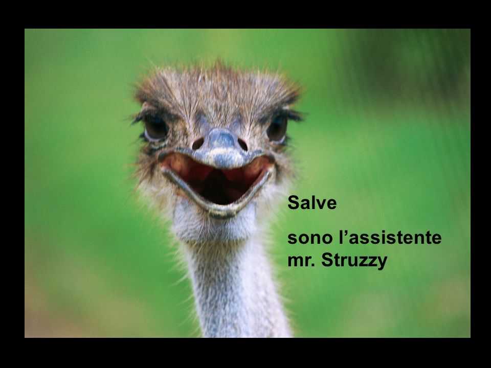 Salve sono l'assistente mr. Struzzy