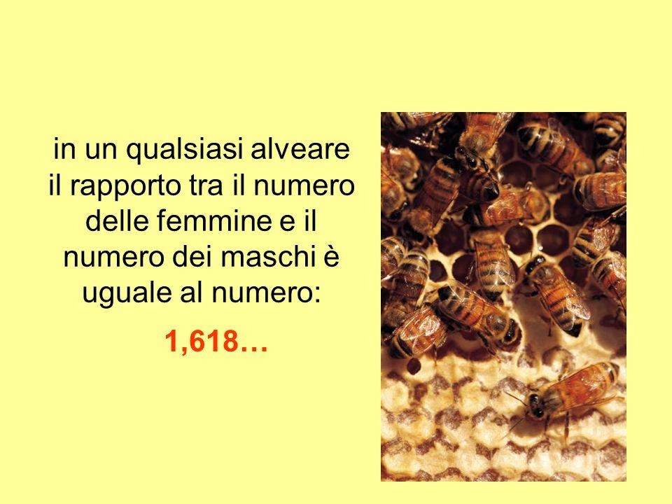 in un qualsiasi alveare il rapporto tra il numero delle femmine e il numero dei maschi è uguale al numero: