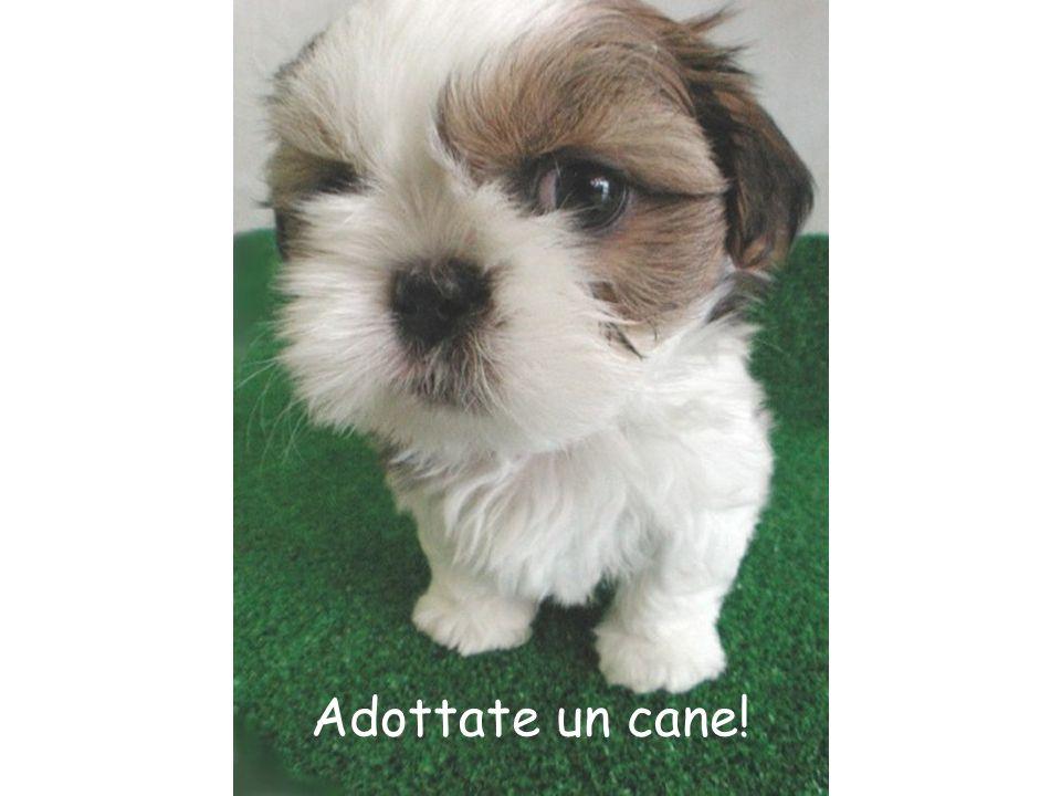 Adottate un cane!
