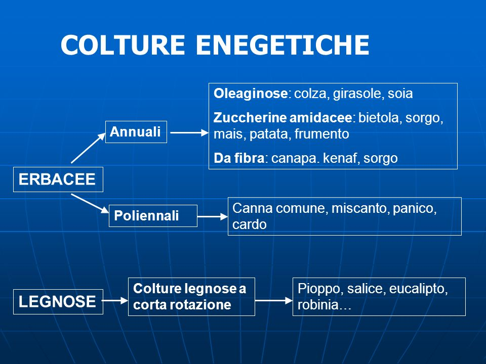 COLTURE ENEGETICHE ERBACEE LEGNOSE Oleaginose: colza, girasole, soia