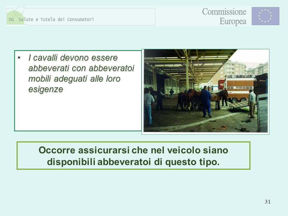 I cavalli devono essere abbeverati con abbeveratoi mobili adeguati alle loro esigenze