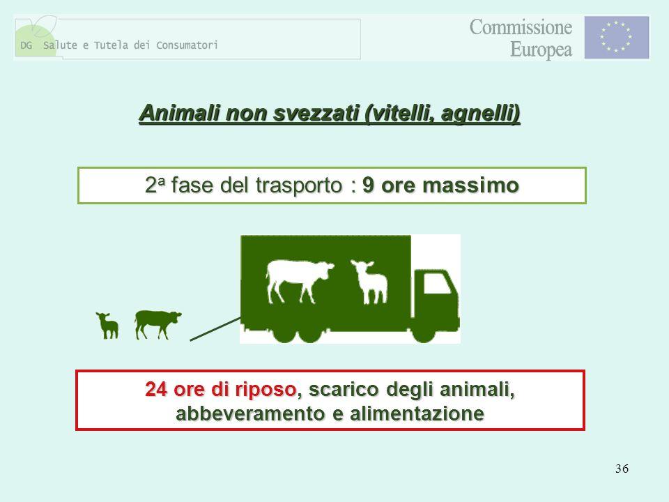 Animali non svezzati (vitelli, agnelli)