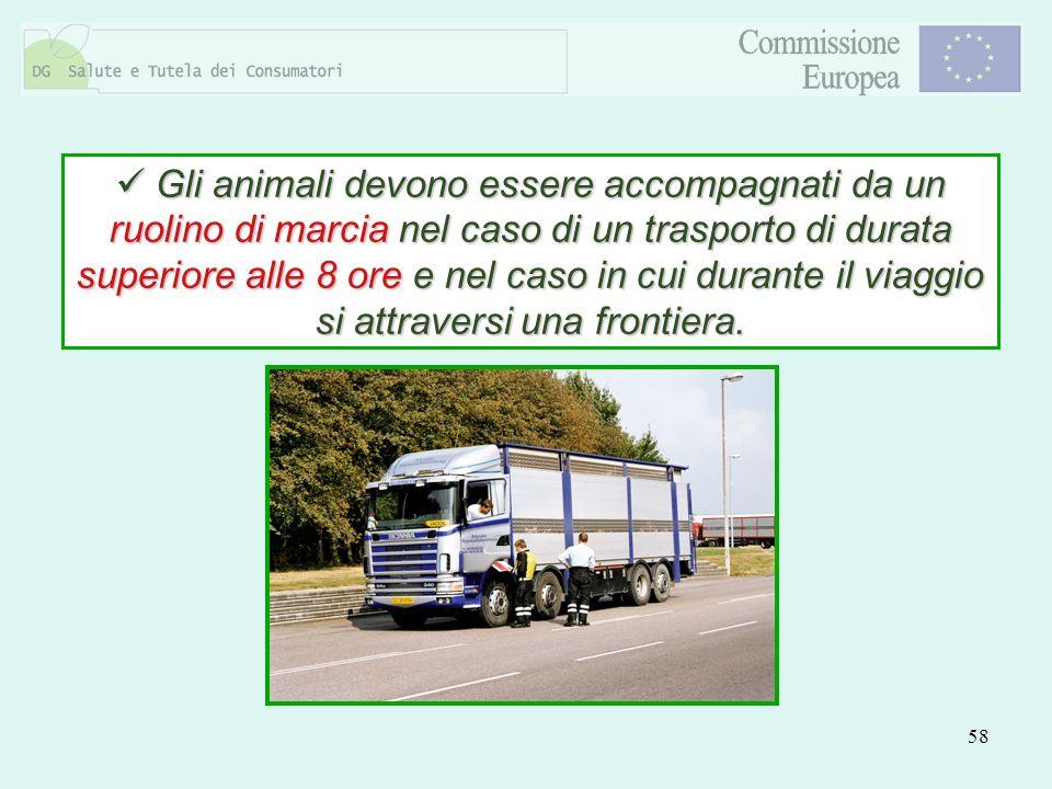 Gli animali devono essere accompagnati da un ruolino di marcia nel caso di un trasporto di durata superiore alle 8 ore e nel caso in cui durante il viaggio si attraversi una frontiera.