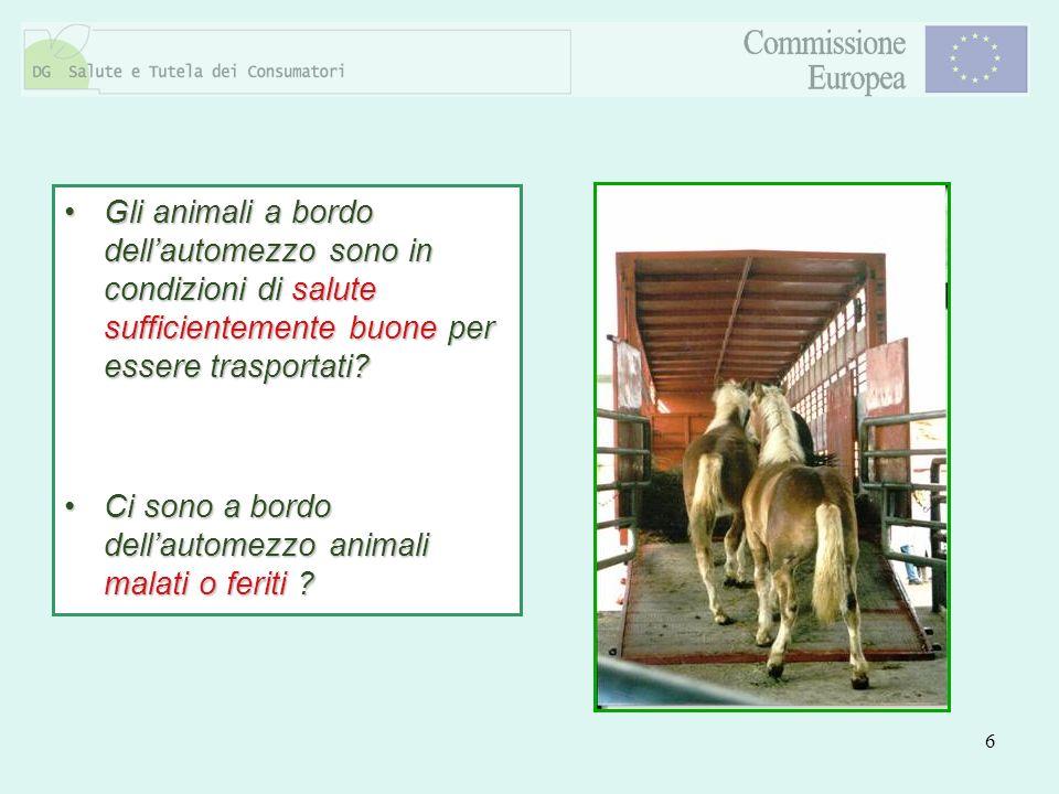 Gli animali a bordo dell'automezzo sono in condizioni di salute sufficientemente buone per essere trasportati