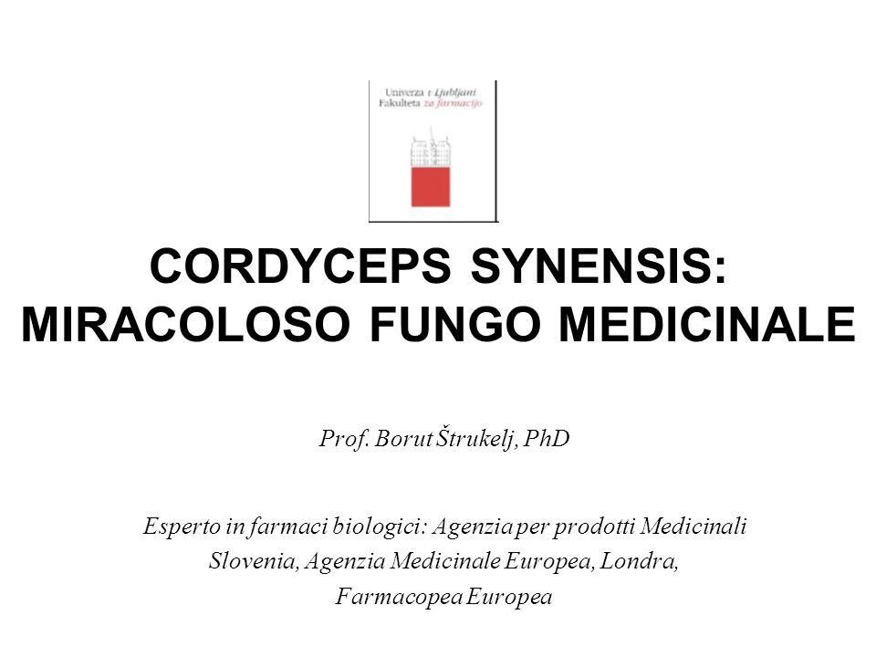 CORDYCEPS SYNENSIS: MIRACOLOSO FUNGO MEDICINALE