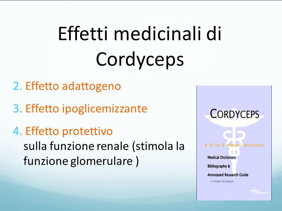 Effetti medicinali di Cordyceps