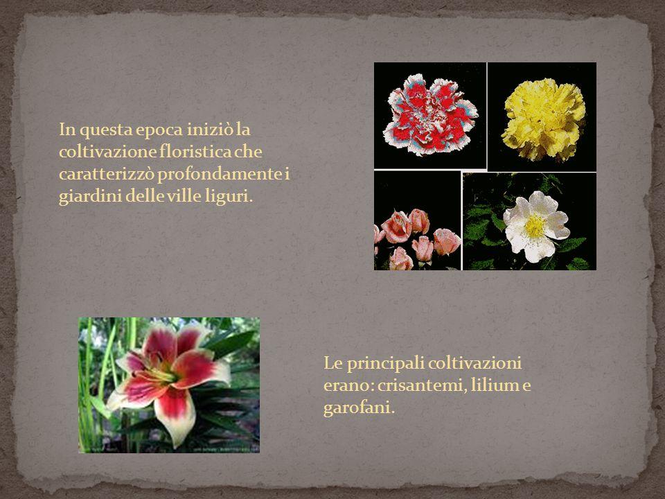 In questa epoca iniziò la coltivazione floristica che caratterizzò profondamente i giardini delle ville liguri.