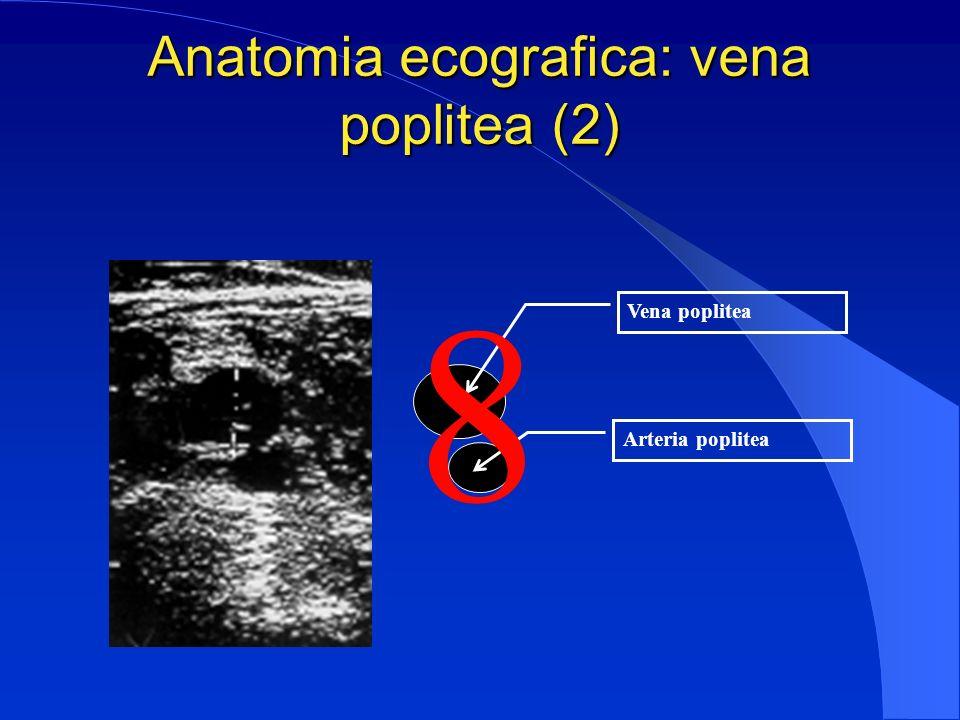 Anatomia ecografica: vena poplitea (2)