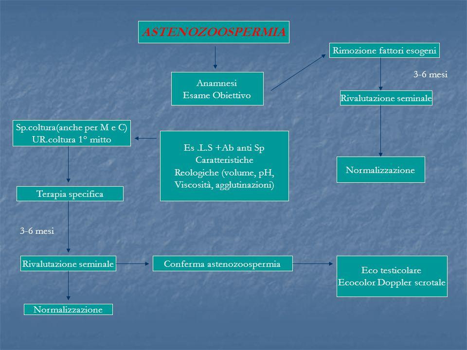ASTENOZOOSPERMIA Rimozione fattori esogeni 3-6 mesi Anamnesi