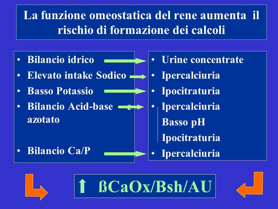 La funzione omeostatica del rene aumenta il rischio di formazione dei calcoli