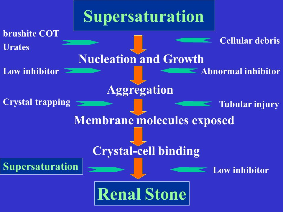 Supersaturation Renal Stone Nucleation and Growth Aggregation