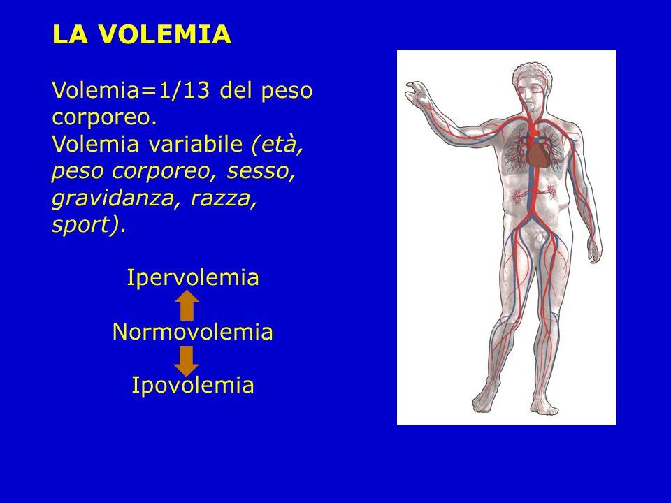 LA VOLEMIA Volemia=1/13 del peso corporeo. Volemia variabile (età, peso corporeo, sesso, gravidanza, razza, sport).