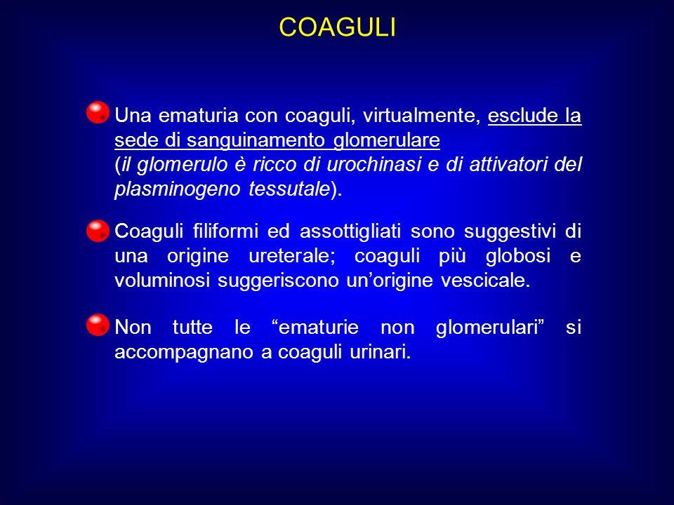 COAGULI Una ematuria con coaguli, virtualmente, esclude la sede di sanguinamento glomerulare.