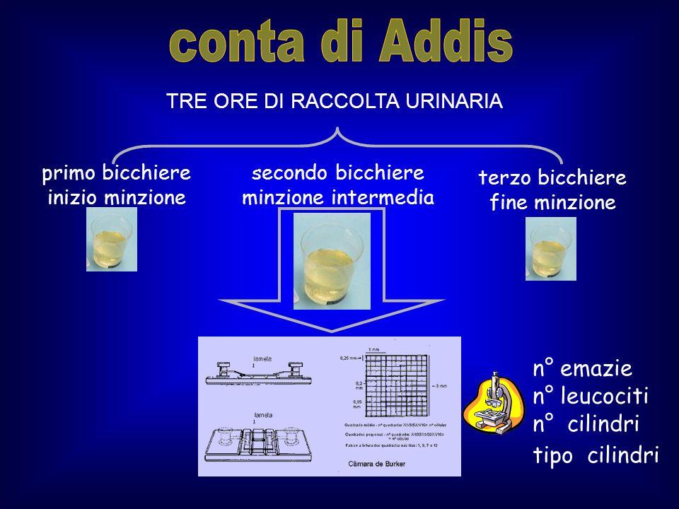 conta di Addis n° emazie n° leucociti n° cilindri tipo cilindri